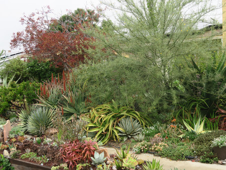 SDHS MEMBERS INVITED: Private Garden Succulent and Cacti Party.
