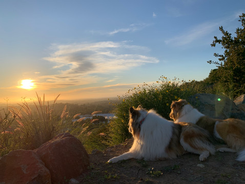 EDITOR'S LETTER: Dogs in the Garden