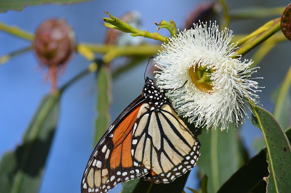 Photo by Mara Koenig/USFWS  (CC - Free to use image - US Fish and Wildlife Service)