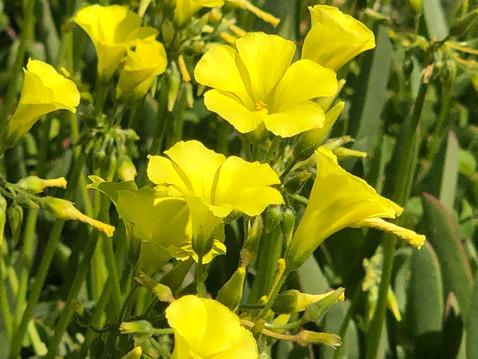 GROW IN ABUNDANCE: Edible Weeds in the Garden