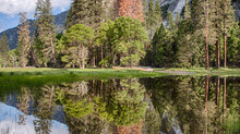 Yosemite Valley - Seasonal Ponds