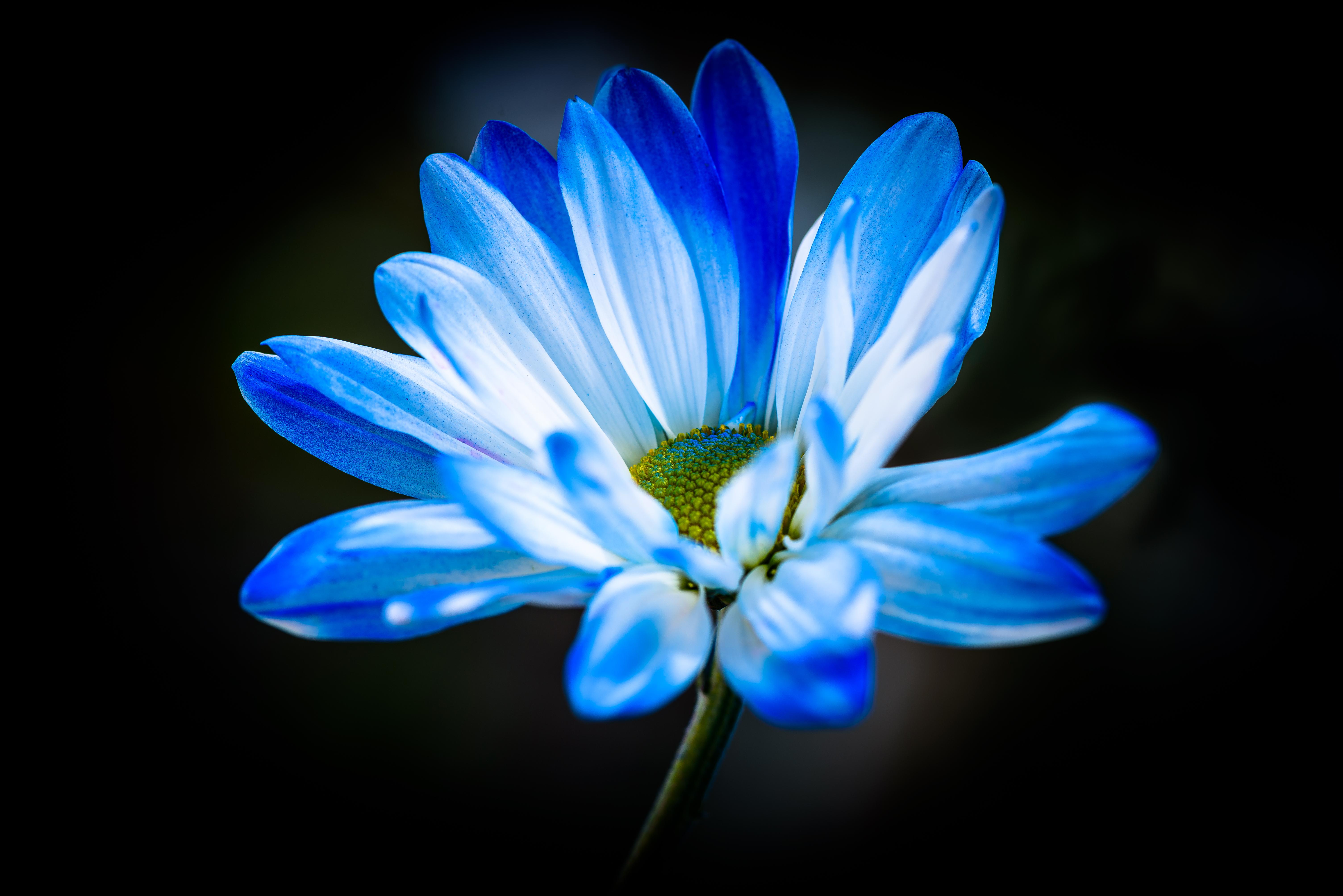 Flower #7264