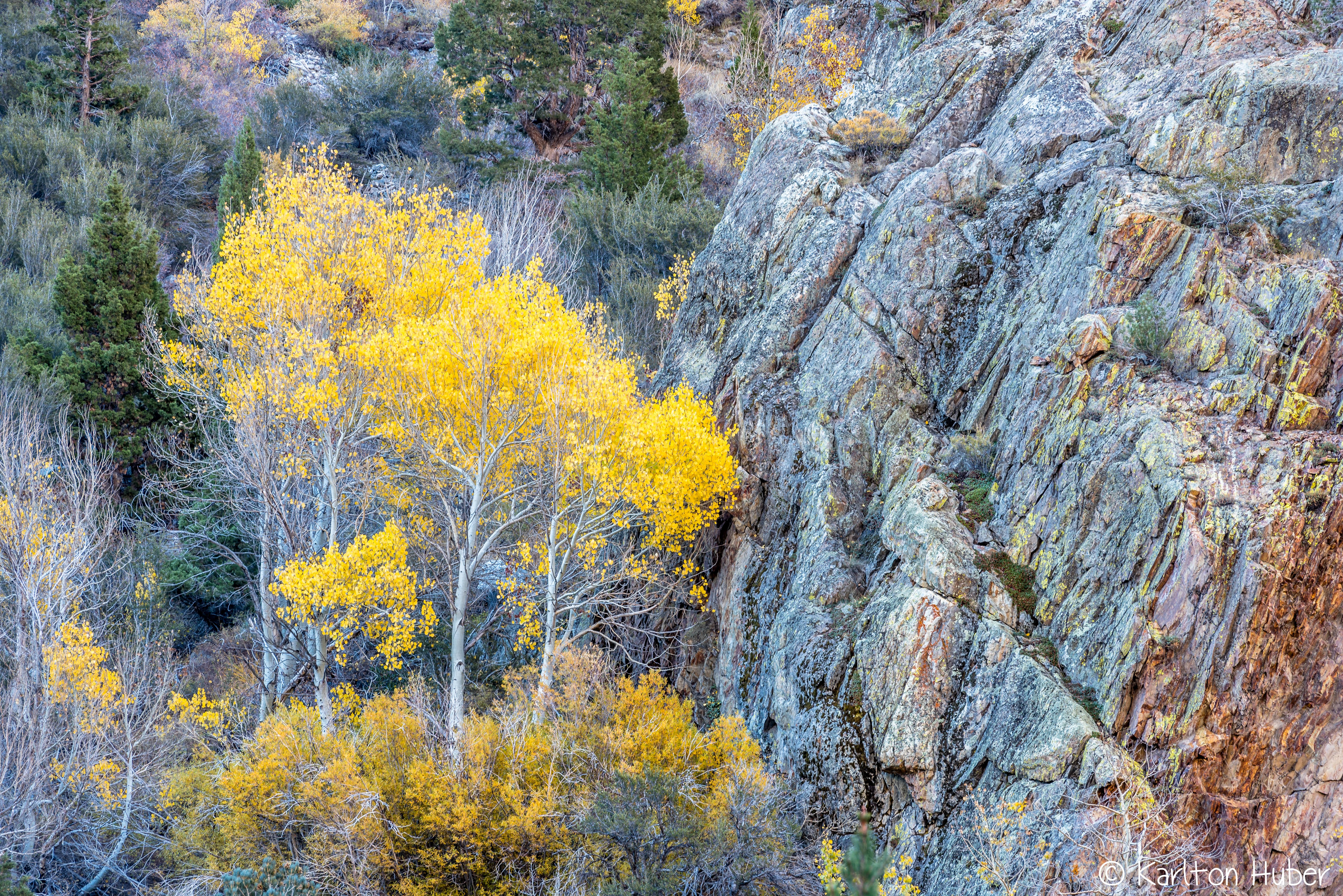 Fall Colors - Tall Aspens, Rugged Terrain