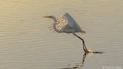 Egret - Lift Off