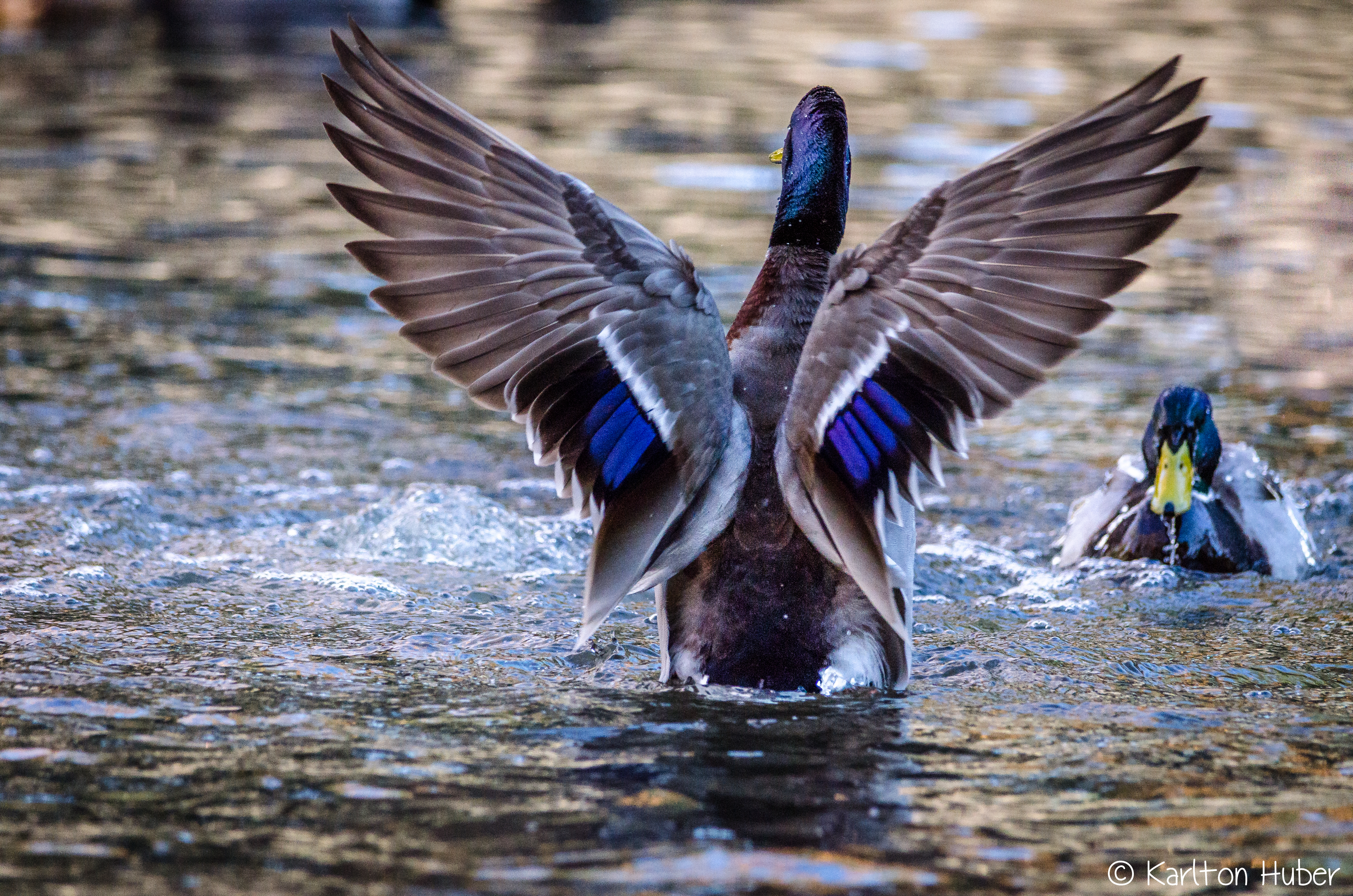 IRP - Another Day At The Duck Wash - 961