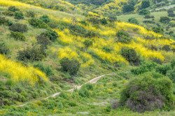 Spring - Local Hillside and Trail