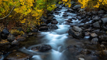 An Autumn Morning, South Fork Bishop Creek