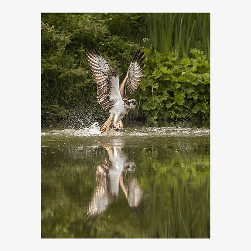 Osprey, On Reflection