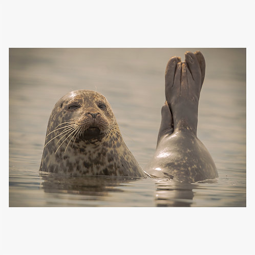 Seal Summer
