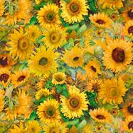 Sunflower Fields .png