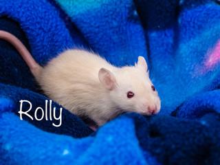 (M) Rolly -
