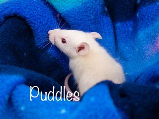 (M) Puddles -
