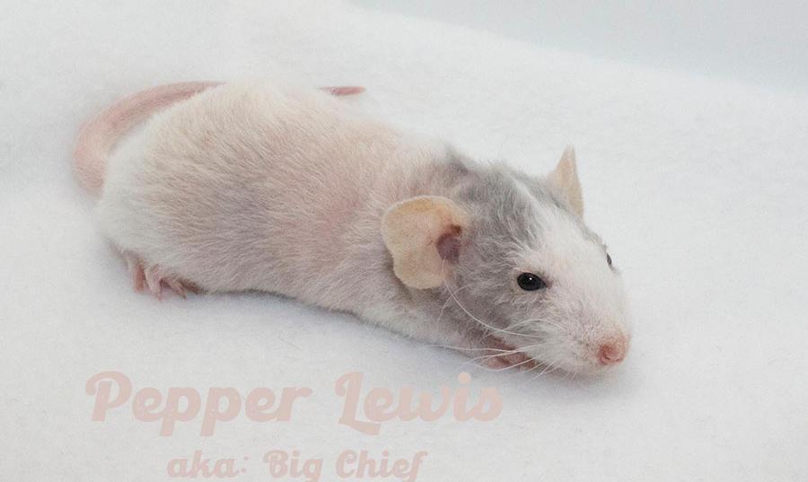 (M) Pepper - Keeping