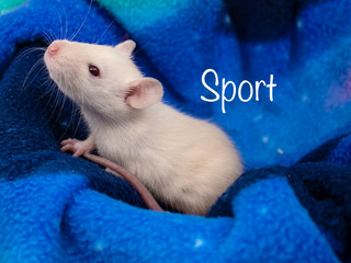 (M) Sport