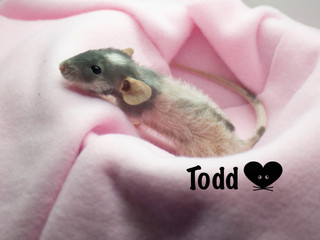 (M) Todd- Reserved Keeping