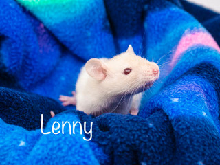 (M) Lenny