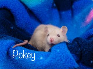(M) Pokey- Jeannette