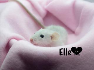 (F) Elle - Reserved Keeping