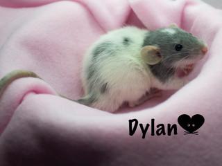 (M) Dylan - Jeannette