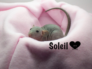 (F) Soleil - Reserved Keeping