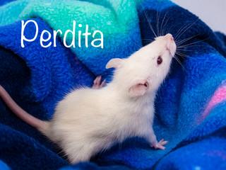 (F) Perdita - Reserved Mackenzie