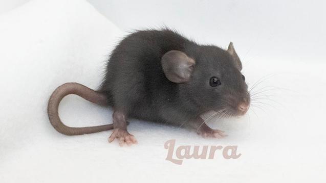 (F) Laura - Keeping