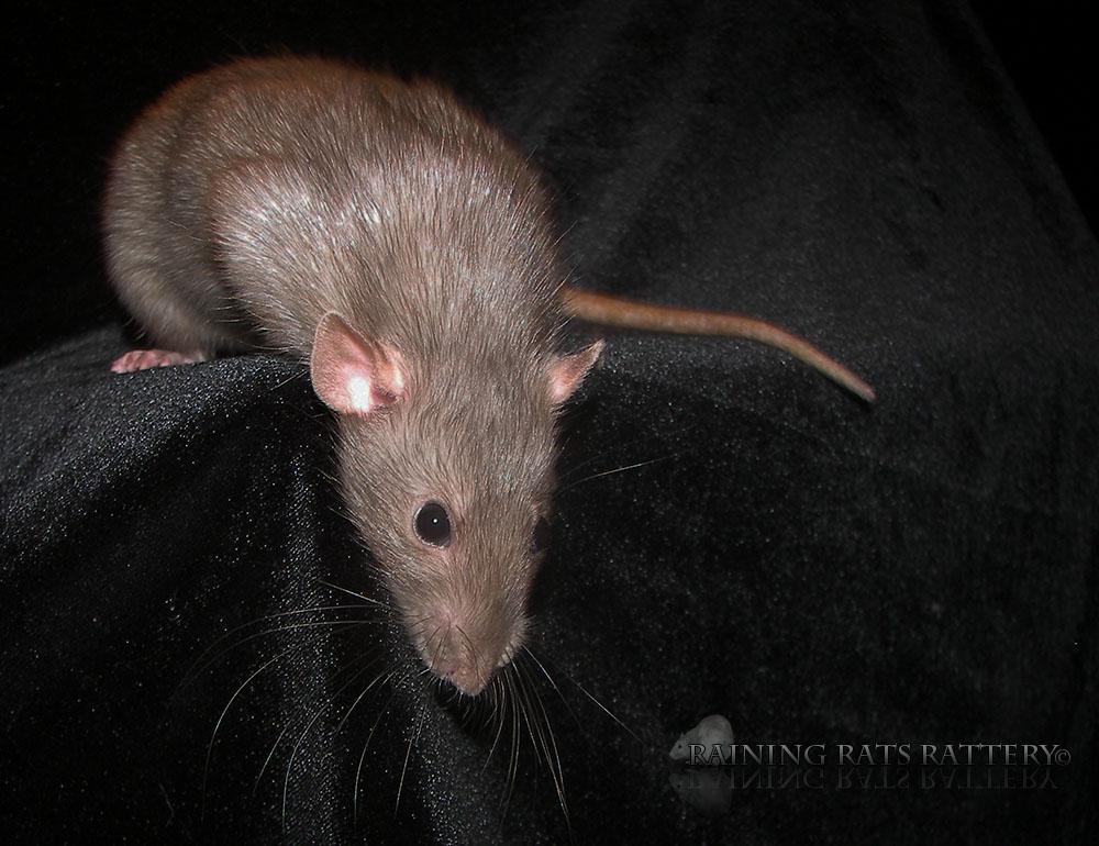 Daphne (2)