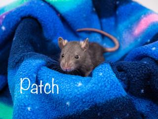 (M) Patch- Reserved Georgia