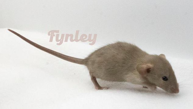 (M) Fynley - Keeping