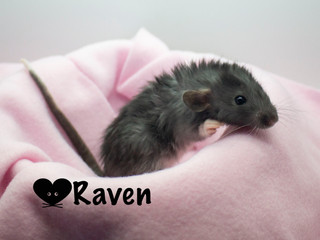 (F) Raven - Reserved Keeping