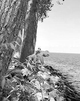lake%20trees%20rocks_edited.jpg