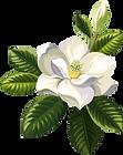 Flor Branca.fw.png