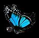 Borboleta Azul.fw.png