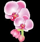 Orquídia.fw.png