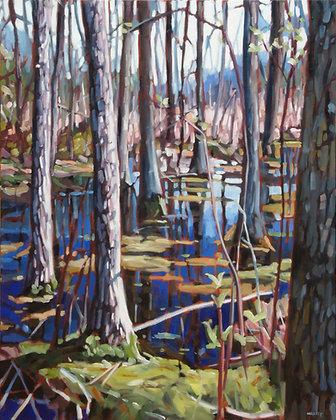 Northern Swamp