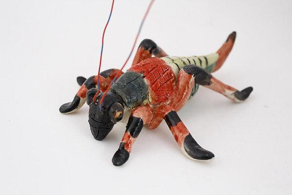 Red & Black Singing Cricket