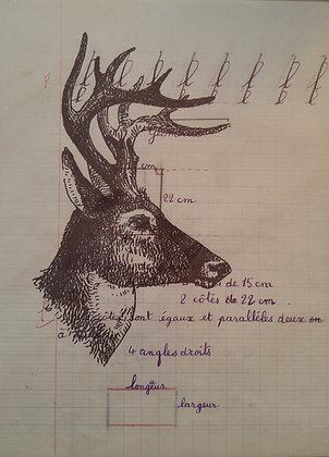 Portait of a Deer