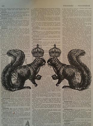 Royal Squirrels