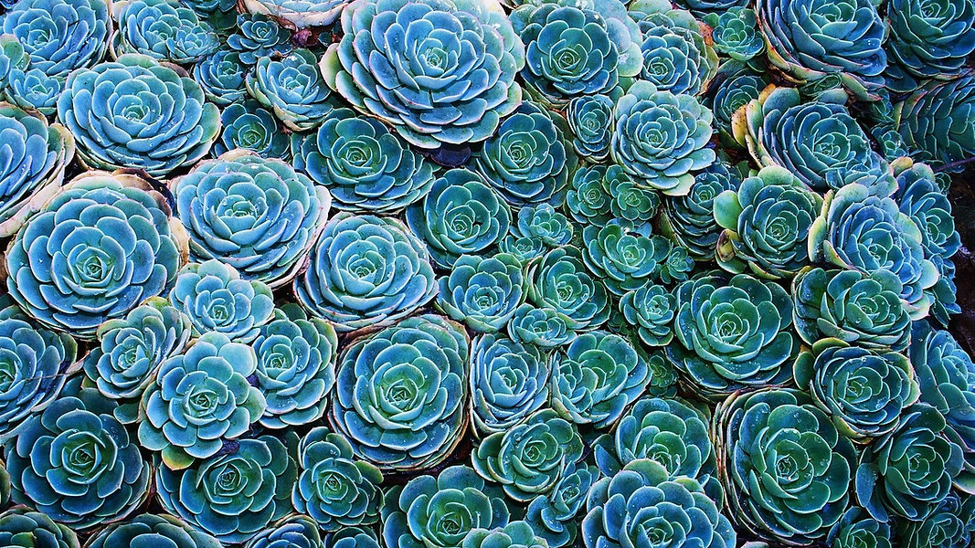 40574-succulents-nature-plants.jpg
