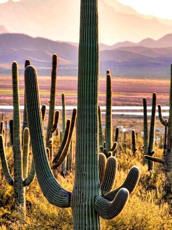 saguaro_0_editedjpg
