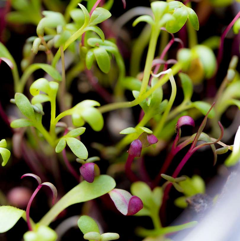 Hudson Valley Micro Greens