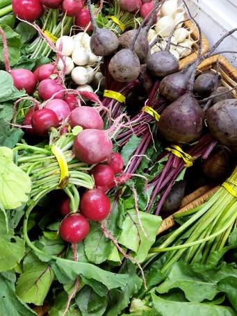 the-chatham-berry-farm