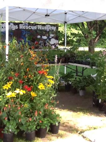 Wild Things Rescue Nursery