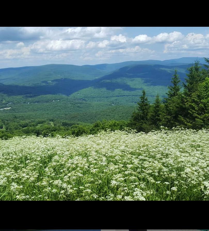 Belleayre Mountain