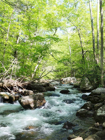 harriman-state-park-stream-4j0b4664_esca