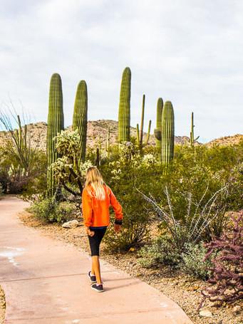 saguaro-national-park-west-5jpg