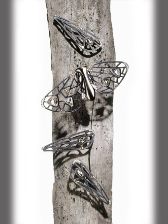 polar_mothswingsjpg