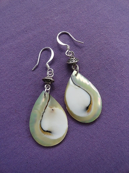Sexy Small Teardrop Chic Nautilus Shell Earrings