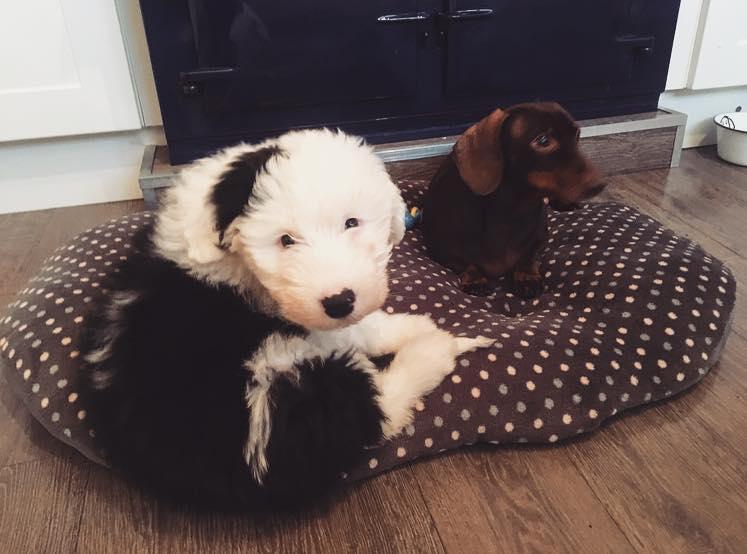 Elsie and Frankie