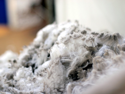 Otematata Shearing '15 2.jpg